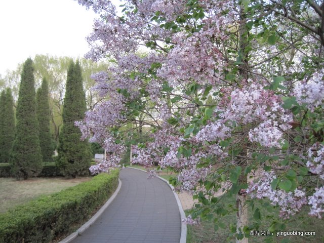 春 · 燕山大学